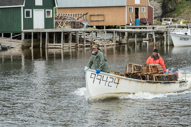 Lobster fishers wit boat full of traps passing fishing shacks and stages at Trout River, Newfoundland