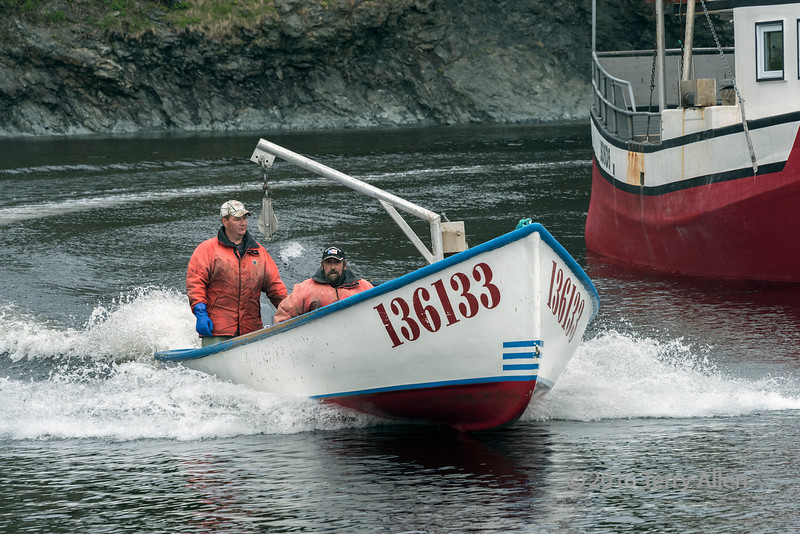 Lobster boat speeding into harbour with the morning catch, Trout River, Newfoundland