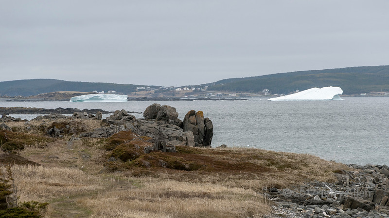 Icebergs in Islands Bay, L'Anse aux Meadows, Newfoundland