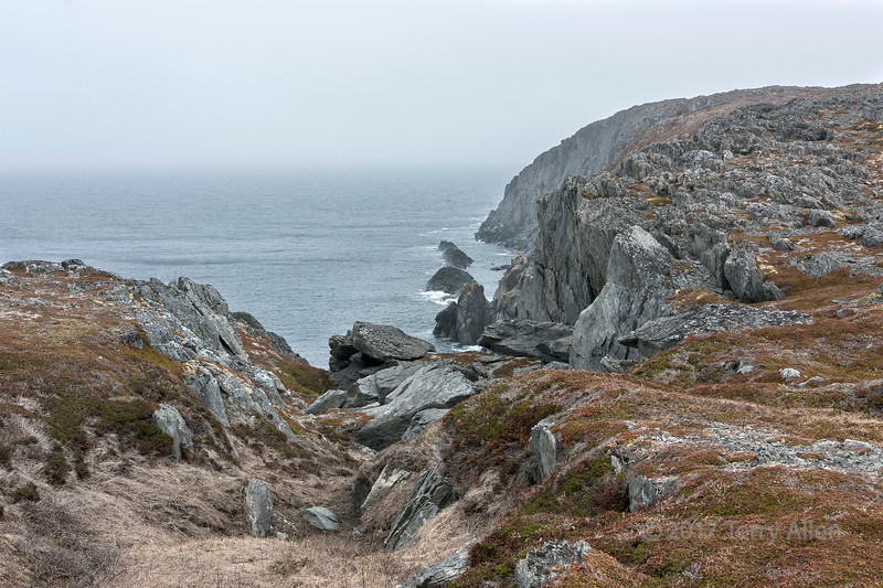 Rugged coast with rocks and lichens, Quirpon Island, Strait of Belle Isle, Newfoundland