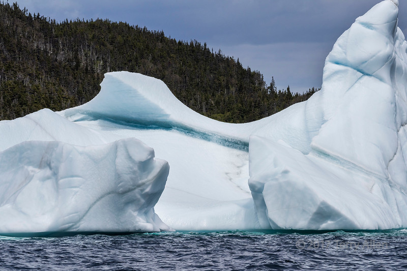 Grounded iceberg and tree-filled cliff, Bonavista Peninsula, Newfoundland