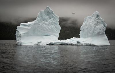Hampden Iceberg