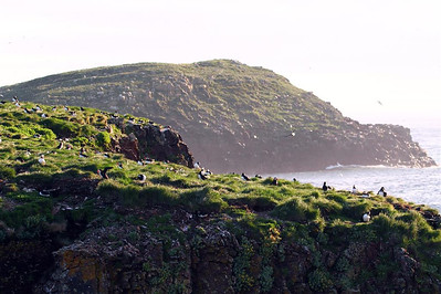 A view of the puffin colony at Cape Bonavista. A great great place as you can actually walk out to the puffins.  There are other colonies in Newfoundland, but you need to take a boat out to see them, and you don't get very close.