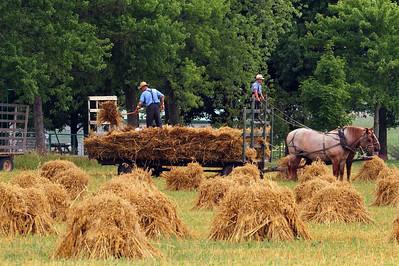 Bringing in the sheaves - near Elmira