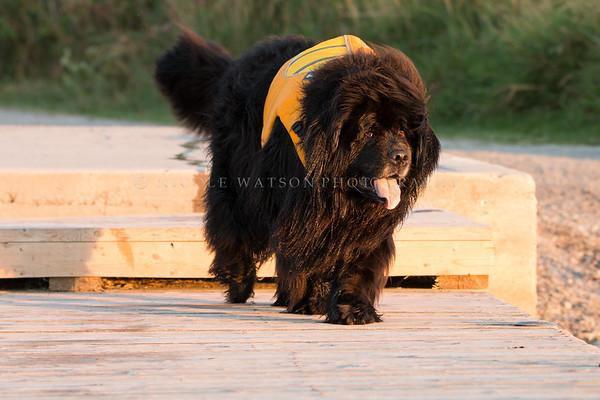 Tillie  on the dock