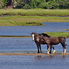 Two Draft Horses