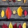 11.07 autumn botany