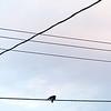 05.18 lovebirds at sunset