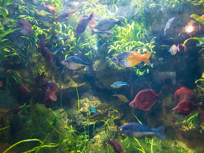 Newport Aquarium 2016
