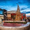 Christmas Trees Friars Walk Shopping Centre Newport Wales.