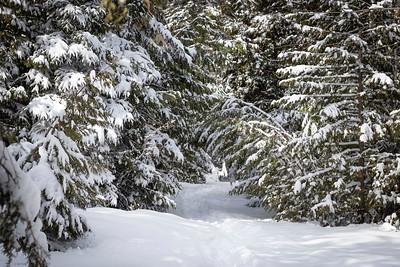 Upland Trail