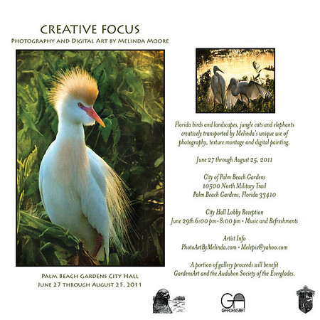 Creative, Focus, Card,