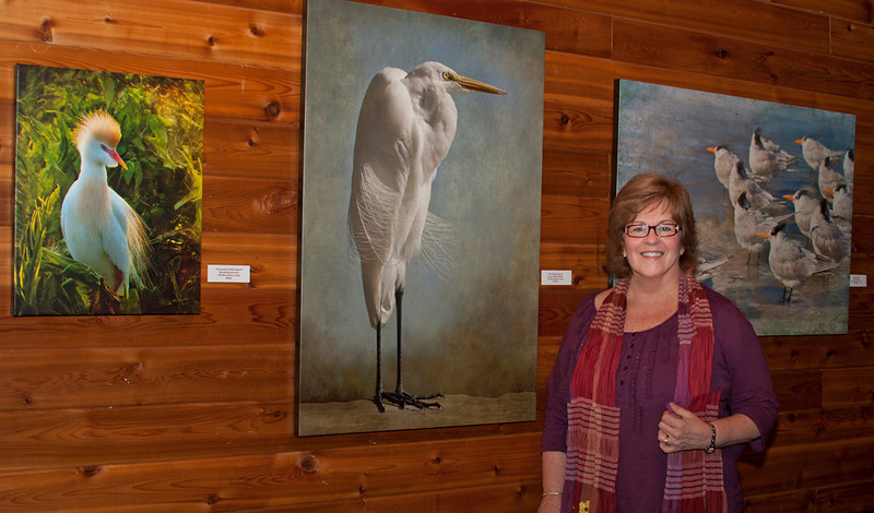 "One of my fave birds ""The Royal Egret"" larger than life."