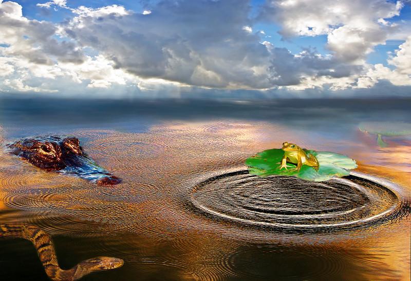 Wetlands Fantasy