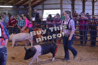 4H Swine Show