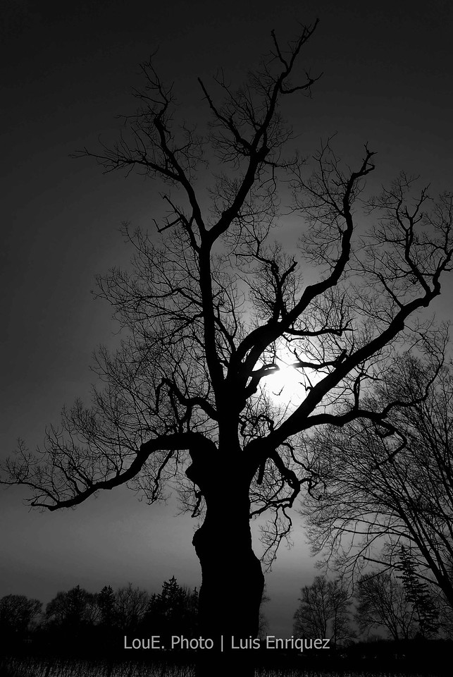 March 21, 2008<br /> <br /> One of the many shots I took this day at Niagara on the lake.  This tree had so much character and the sun was setting beautifully behind it.  It looks great in colour also but decided to go with B&W with a bit of curves in photoshop.