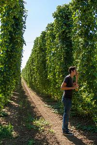 Hop Farming is a Big Industry in Portland