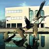 Administration building of Amabasador University in Big Sandy.  Lester Phipps, Jr.  12-31-96