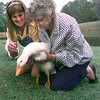 Date:   5/14/98---Fran Weaver, left the activies director for the Alpine House and Nelle Power, right, a resident holds one of four ducks they released Thursday morning at Lakeview Memorial Cemetery at their pond in Gregg County, after Alpine raised the ducks form eggs. Kevin green