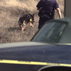2/10/99---A Longview PD canine unit searches an open field adjacent to Austin Bank following a robbery Wednesday. Two suspects were taken into custody shortly after the robbery. Police would not confirm or deny the car in foreground was associated with the robbery, although it had been roped off. bahram mark sobhani