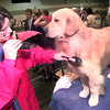 7-29-00---Barbara Stoltenberg, right, of Houston, blow drys Ryan the Golden Retriever of Pat Simpson, of Austin, Saturay afternoon at the Longview Kennel Club dog show at Maude Cobb in Longview. Kevin GReen