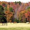 Fall foliage near Liberty City Wednesday November 29, 2000. Les Hassell