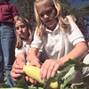 Christian Heritage School sixth graders Haley Smith, left, and Kate Coleman,right, prepare to pick a squash Monday afternoon..  Jennie Coleman's science class planted a garden that they will harvest and donate their produce to the HiWay Rescue Mission.  by DARLENE-10-29-01