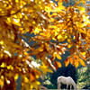 A horse grazes in a pasture off Hamby Road as the Sun brings out the color of the fall leaves Wednesday 30, 2002 in north Gregg County. Kevin Green