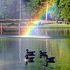 9-28-03 --- A group of Canada geese swim past a rainbow created by the sray of the fountain at Teague Park Sunday afternoon.  JUSTIN BAKER