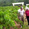 Rodrigo and Luisa Valdez walk threw Kiepersol Estate vineyard in Tyler after picking grapes during the 4th Annual Harvest Festival, Saturday, July 31, 2004. Ricardo B. Brazziell