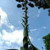 Ed and Jenny Bowers' Century Plant