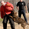 "Longview Police Department officer Kirby DeLoach, right, calls out to his dog ""Yoost"" a German Shepherd as the dog bites pretend bad guy Jeff Hoover, with InterQuest Detection Canines of Northeast Texas, during training Tuesday, February 28, 2006 at Kilgore Police Department.  (Kevin Green/News-Journal Photo)"
