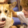 Parker Ellis, 7, of Lubbock, Texas, plays with Kyra, a Pembroke Welsh Corgi at the Longview Kennel Club All Breed Dog Show and All Breed Obedience Trials at Maude Cobb Activity Center Saturday, July 15, 2006. (Luisa Morenilla/Longview News-Journal)