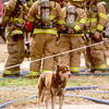 A dog stands waay from Longview firefighters as they work to put out a fire that occured Thursday at 608  Harrell St. in Longview. (Jacob Croft Botter/News-Journal Photo)