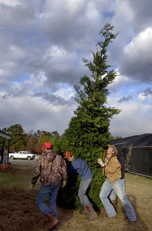 LNJ 2008-November