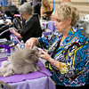 Louise Rawleigh grooms her Toy Poodle, Gracie, Sunday, July 31, 2011 at the Longview Kennel Club's All Breeds Show at the Maude Cobb Convention and Activity Center. (Les Hassell/News-Journal Photo)