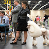 Ashley Hunsaker and her Standard Poodle, Cara, wait to hear the results of their event Sunday, July 31, 2011 at the Longview Kennel Club's All Breeds Show at the Maude Cobb Convention and Activity Center. (Les Hassell/News-Journal Photo)