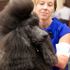 Dawn Wilken gives her Standard Poodle, Rex, a scratching behind the ears after their win Sunday, July 31, 2011 at the Longview Kennel Club's All Breeds Show at the Maude Cobb Convention and Activity Center. (Les Hassell/News-Journal Photo)