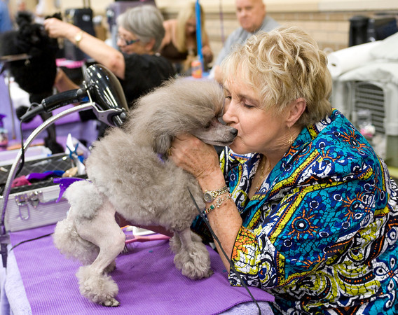 Louise Rawleigh gives her Toy Poodle, Gracie, a kiss while grooming her Sunday, July 31, 2011 at the Longview Kennel Club's All Breeds Show at the Maude Cobb Convention and Activity Center. (Les Hassell/News-Journal Photo)