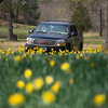 Visitors drive through the garden trail Wednesday, Feb. 29, 2012 at Mrs. Lee's Daffodil Gardens outside of Gladewater. (Les Hassell/News-Journal Photo)