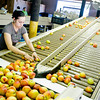 Margarita Reyes picks out the soft peaches while working at McPeak Orchards in Pittsburg on Wednesday, June 20, 2012. (Michael Cavazos/News-Journal Photo)