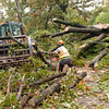 City of Longview street department's Cris Hunter in tractor and Greg Zuniga sawing wood as they work to clear the 200 block of Wood Place of a downed tree Thursday, Oct. 31, 2013, in Longview.  (Kevin Green/News-Journal Photo)
