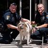 LPD Dog Rescue