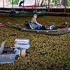 GIANT SALVINIA