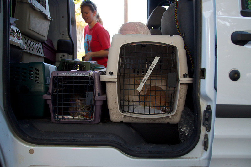 Yolo SPCA Spay & Neuter