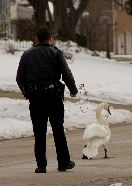 """and here, checking his SIX.  This....was one pissed off Swan and he was ready to """"Chuck Norris"""" this Sgt. into tomorrow.  :-)"""