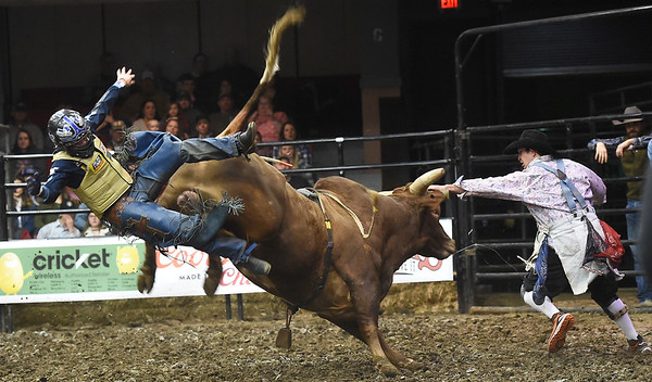 """Cody Rodeo Tyler, of  Perry Okla., takes a tumble off  """"Modified Hou"""" during the LJ Jenkins Bull Riding Tour Finals on Saturday night at Memorial Hall.<br /> Globe 