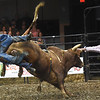 "Cody Rodeo Tyler, of  Perry Okla., takes a tumble off  ""Modified Hou"" during the LJ Jenkins Bull Riding Tour Finals on Saturday night at Memorial Hall.<br /> Globe 