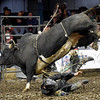 "Top-ranked cowboy Wrangler Dunda, of Stratford, Okla., takes a tumble off ""Big John"" during the LJ Jenkins Bull Riding Tour Finals on Saturday night at Memorial Hall.<br /> Globe 