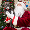 One-year-old Talula, a yorkie-chihuahua mix, gets an audience with Santa during the Joplin Humane Society's Holiday Open House on Saturday at the humane society. Talula is part of the Marilyn Alley family.<br /> Globe | Laurie Sisk